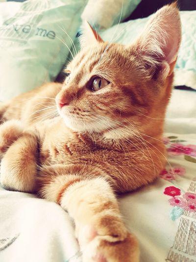 A cat's life. Cat Lovers Pets Close-up Animal Themes Mamalade Wasakitten Beautiful Gingerkitty