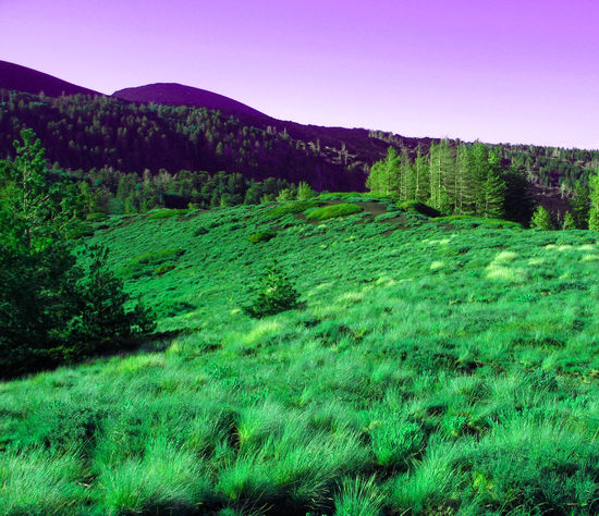 Cold Forest Grass Green Landscape Nature Nature Non-urban Scene Photoshop Trees
