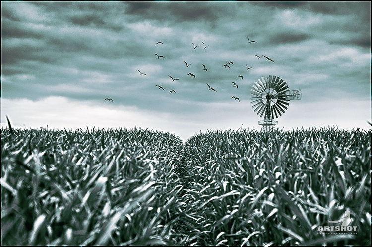 Pinwheel | Windrad Windrad Pinwheel Landscape Cloud Sunset Animals Colorkey GERMANY🇩🇪DEUTSCHERLAND@ Ostsee Black & White