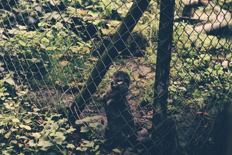 Animals In The Wild Captivity Chain Link Fence Chainlink Fence Day Endangered Species Fence Grass Lawn Mammal One Animal Outdoors Protection Safety Security Wire Mesh Zoo