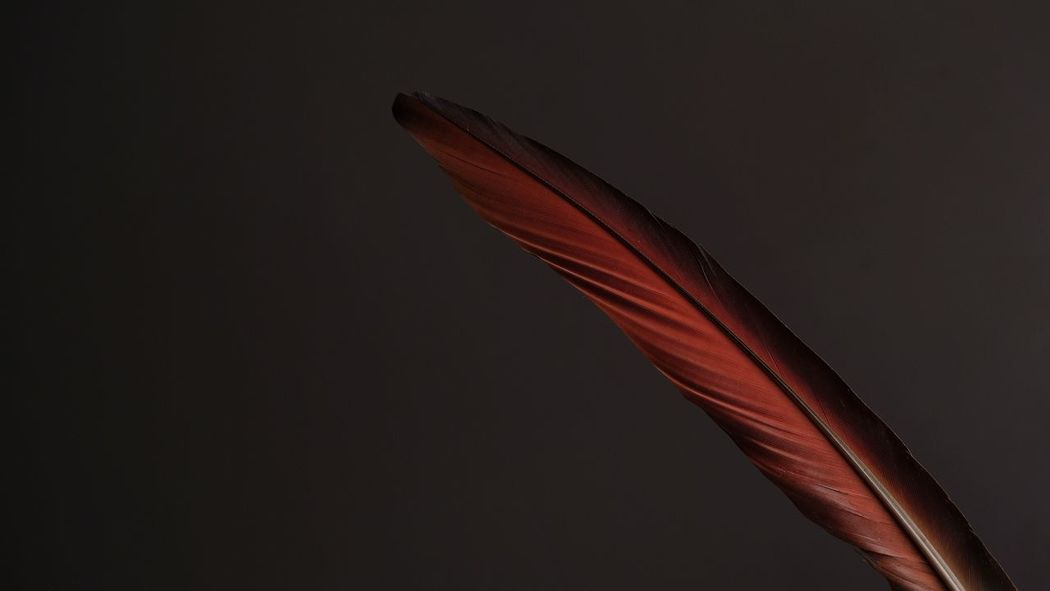 Black Background Close-up Feather  Fragility Minimal Minimalism No People Red Red Feather Studio Shot