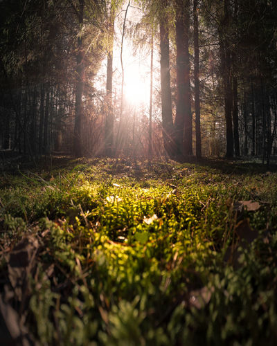 Morning forest Forest Forest Photography Forest Trees Hike Hiking Hiking Adventures Woods WoodLand Nature Nature_collection Nature Photography Naturelovers Nature On Your Doorstep Nature_perfection Naturelover Nature Collection Dawn Sunrise Sunset