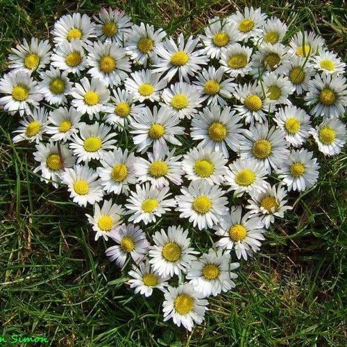 Flower Fragility Petal Beauty In Nature Flower Head Nature Growth Daisy Freshness Yellow White Color Field High Angle View Blooming Plant Outdoors No People Day Springtime Close-up