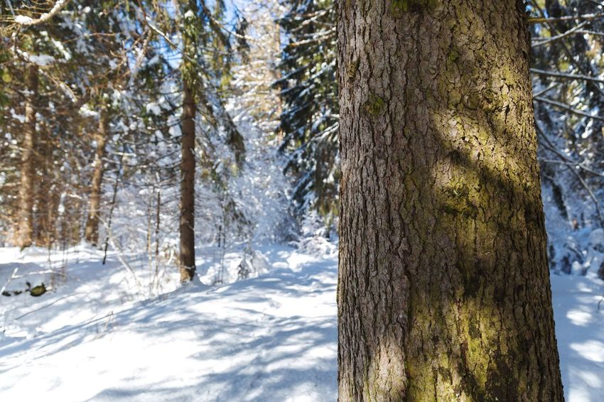Go out get lost in the woods and enjoy the experience. Discover  Travel Sun Tree Snow Nature Tree Trunk Winter Cold Temperature No People Day Tranquility Beauty In Nature Tranquil Scene Sky Forest Scenics Outdoors