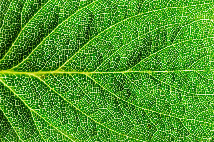 Green Color Backgrounds Full Frame Leaf Nature No People Beauty In Nature Grass Freshness Close-up Feuilles D'arbre Feuille  Feuille Verte Macro Macro Photography Macro_collection Macro_captures Day