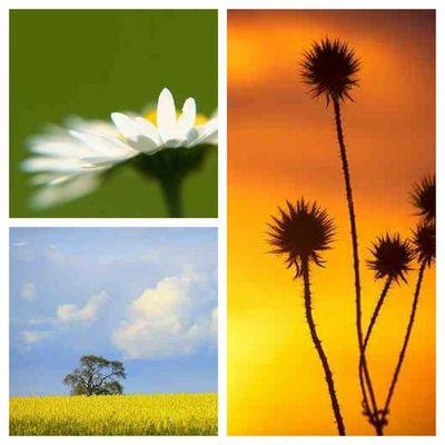 #instagood #bedsigers #cloud #cloud #sky #flower #tree Flower Sky Tree Cloud Instagood Instadaily Bedsigers