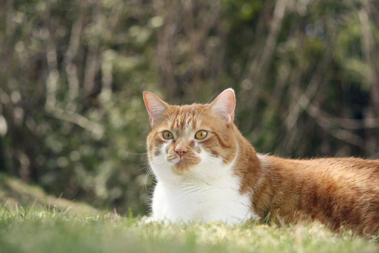 Surface level view of cat looking away on grass area