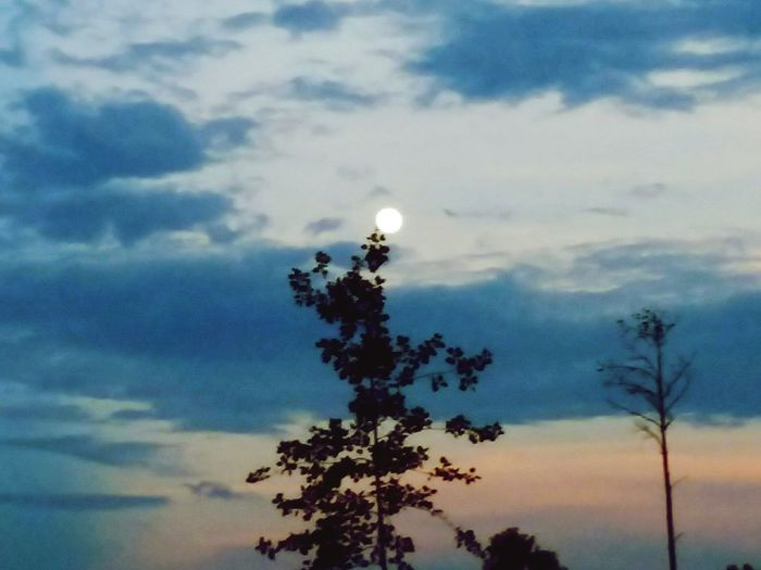 Tree Sunset Moon Silhouette Dusk Sky Cloud - Sky Planetary Moon Moon Surface Sky Only Space Exploration Astronomy Space And Astronomy Meteorology Dramatic Sky Single Tree Cloudscape Treetop