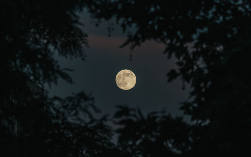 Moon Night Full Moon Astronomy Space And Astronomy Moonlight Tree Planetary Moon Tranquility Nature Outdoors Sky Beauty In Nature No People Star - Space 10
