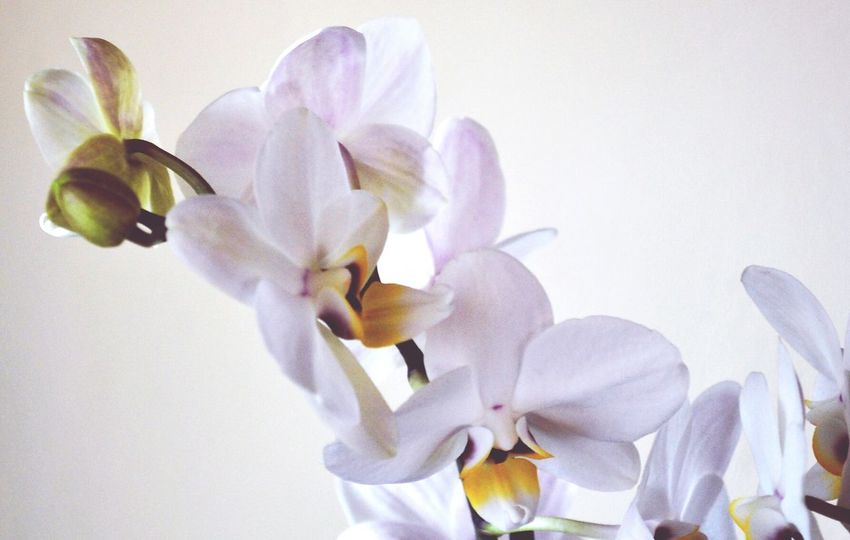 Flower Nature Petal Beauty In Nature Fragility Blossom Flower Head Botany Plant Springtime Growth Close-up Freshness No People Orchid Perfume Day Outdoors