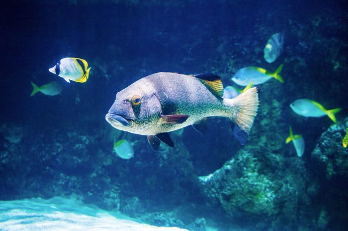 Fish Fishes Exotic Fish Animals Aquarium Underwater UnderSea Sea Life Swimming Animals In The Wild Animal Themes Beauty In Nature Sea Nature Water One Animal Animal Wildlife
