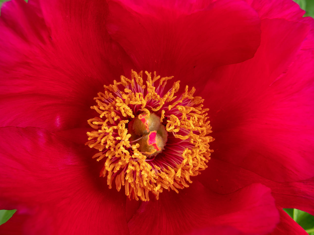 FULL FRAME SHOT OF RED FLOWER