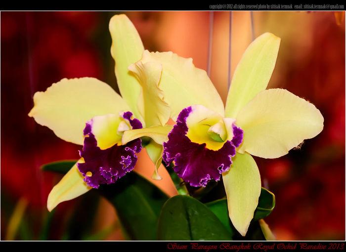 Siam Paragon Bangkok Royal Ochid Paradise 2013 @ Thailand. Flowers Orchids Thailand_allshots Flower Fantasy