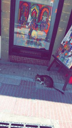 Art Is Everywhere Connected By Travel Cute Cat Cute Cat 😻 Art Cat Cute♡ Day Drawing High Angle View No People