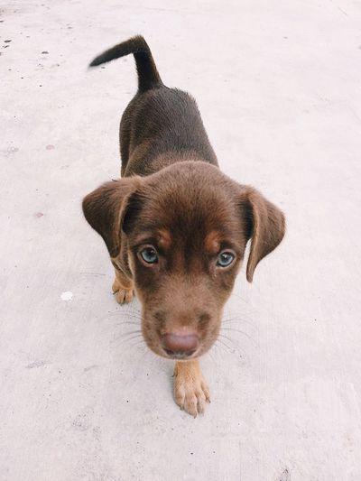 Dog Pets Dogs Mixedbreeddog Mixedbreed Brown