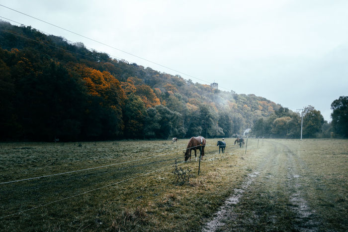 """The road to..."" Hey friends...A new story from my journey to Thuringia on the hunt for castles. Beauty In Nature Castle Day Domestic Animals Fog Foggy Foggy Day Hill Horse Horses Landscape Landscape_Collection Landscape_photography Landscapes Livestock Mammal Nature Nature Nature_collection No People Outdoors Province Sky Tree Way"