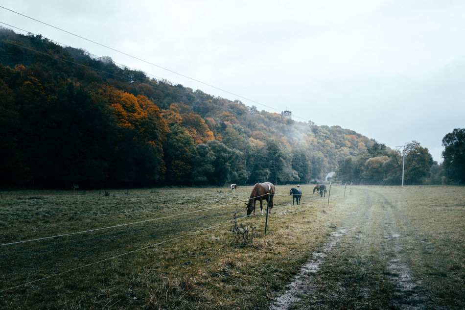 """""""The road to..."""" Hey friends...A new story from my journey to Thuringia on the hunt for castles. Beauty In Nature Castle Day Domestic Animals Fog Foggy Foggy Day Hill Horse Horses Landscape Landscape_Collection Landscape_photography Landscapes Livestock Mammal Nature Nature Nature_collection No People Outdoors Province Sky Tree Way"""