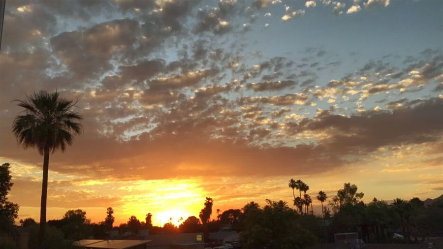 ❤️ Phoenix sunsets tTreesSkycCloud - SkypPalm TreesSilhouettebBeauty In NaturedDramatic SkynNaturesScenicsnNo PeopletTranquilitytTranquil SceneoOutdoorsdDay