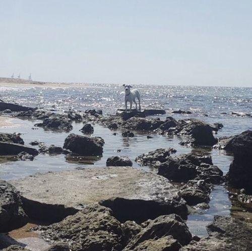 Sea And Sky Dog Life Rocks