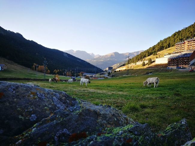Domestic Animals Mountain Animal Themes Animal LivestockNature Agriculture Farm Landscape No People Rural Scene Beauty In Nature Andorra🇦🇩