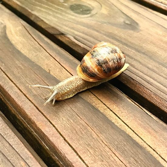 Saut d'obstacle Wood - Material Animal Themes Animal Animal Wildlife Animals In The Wild One Animal Reptile No People High Angle View Gastropod