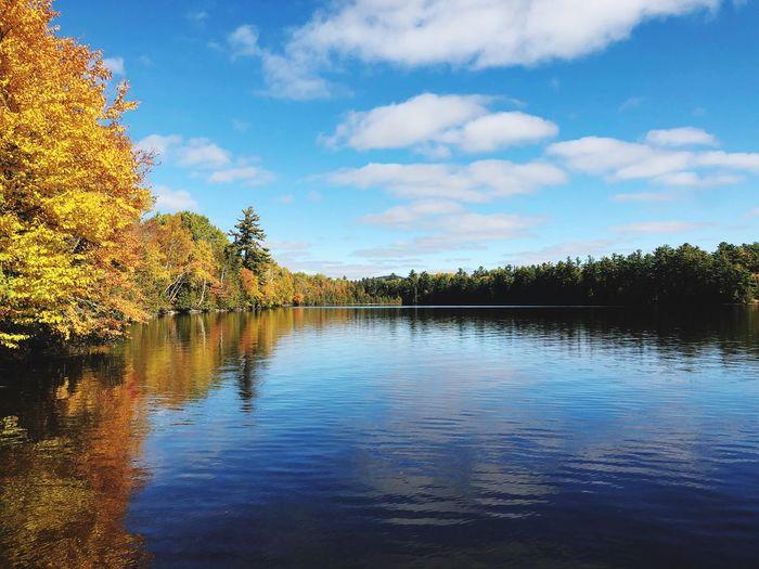 Foliage Leaves Fall Autumn New England  Calm Peaceful Maine