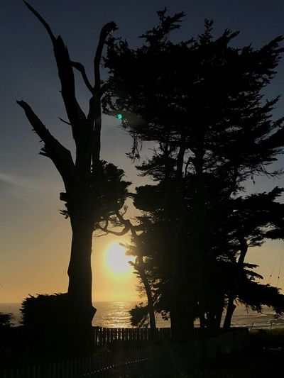 Pidgeonlighthouse Pidgeonpoint Tree Silhouette Sunset Tree Trunk Nature Growth Beauty In Nature Tranquility Branch Tranquil Scene Sky Scenics No People Outdoors Day