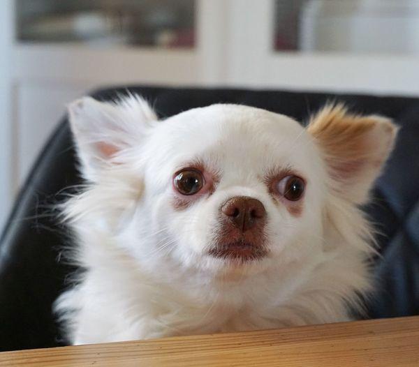 Dog Domestic Pets One Animal Domestic Animals Mammal Animal Themes Dog