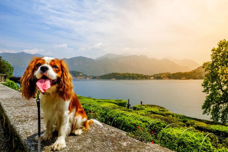 Tremezzo, Italy Villa Carlotta Italy Como Lake Lake Como Dog Landscape Nature Building Architecture Tremezzo