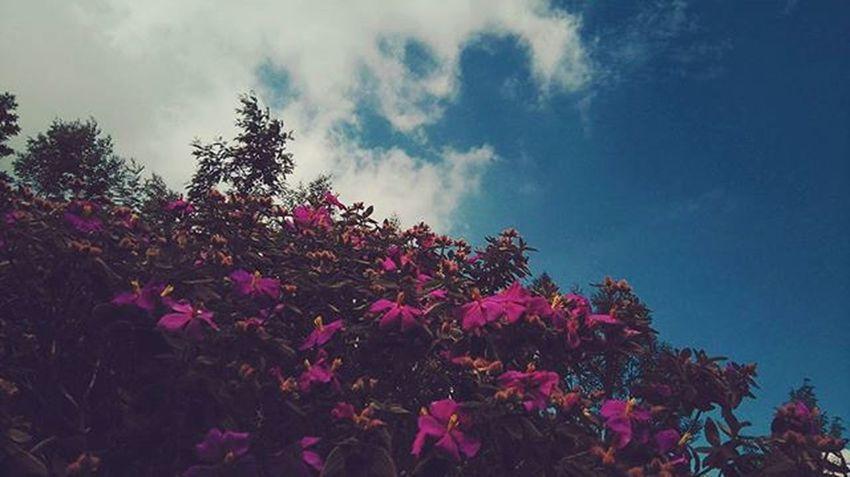 Exploring kerala Munnar Meeshapulimala Ride Flowers Pink Green