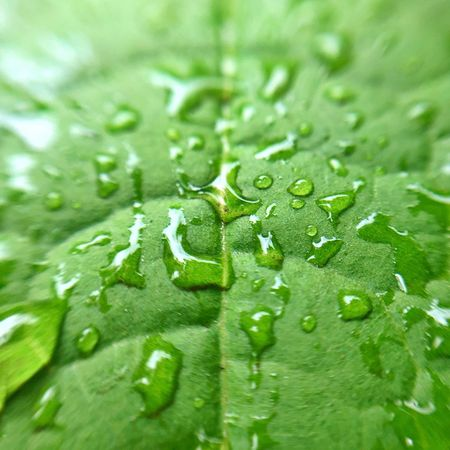 Drop Green Color Wet Plant Part Leaf Water Close-up Backgrounds Full Frame Plant No People Nature Growth Freshness Beauty In Nature Selective Focus Day RainDrop Rain Outdoors