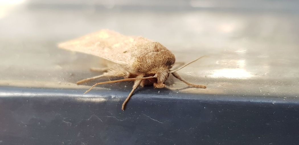 Insect Close-up Animal Themes Animal Leg