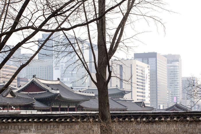 Architecture Bare Tree Branch Building Building Exterior Built Structure City Cityscape Clear Sky Day Gyungbok Palace Modern Office Building Old And Modern Palace Residential Building Residential Structure Roof Roof Sky Skyscraper Tall - High Tiled Roof  Tower Tree