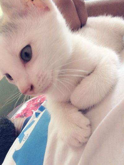 Sweet Cat Animal Angery Lazy Day