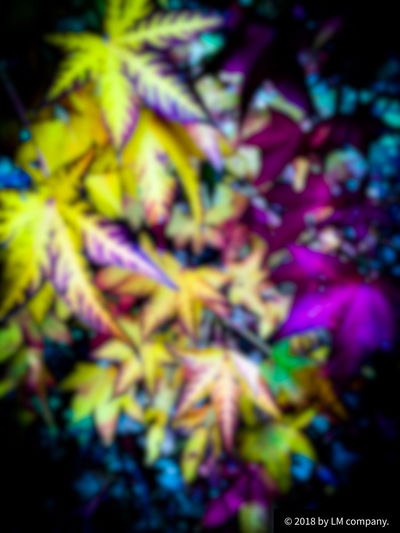 Autumn by LM Multi Colored No People Selective Focus Full Frame Backgrounds Growth Plant Beauty In Nature Close-up Nature Outdoors Purple Abstract Day Pattern Plant Part Flowering Plant Leaf Tranquility