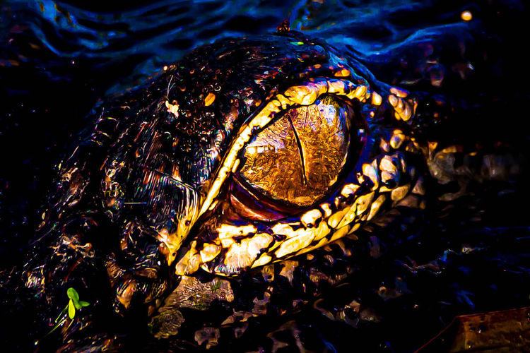 Marine Selective Focus Underwater One Animal Wet Animal Themes Animal Full Frame Sea Day Animals In The Wild Outdoors Animal Wildlife High Angle View Reptile Pattern Nature No People Water Close-up