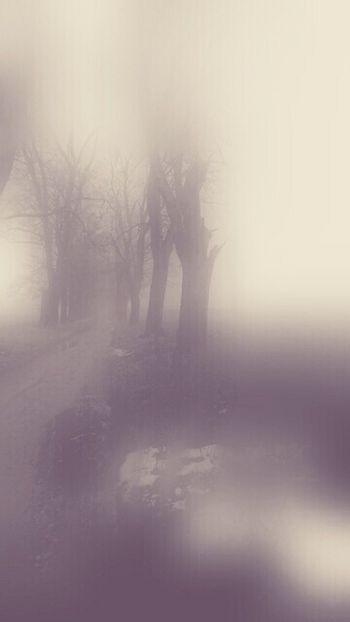 Foggy Day Landscape FogyNature Tree
