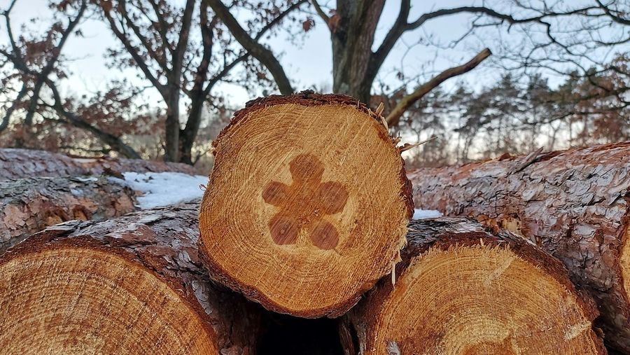 Close-up of logs on tree trunk during winter