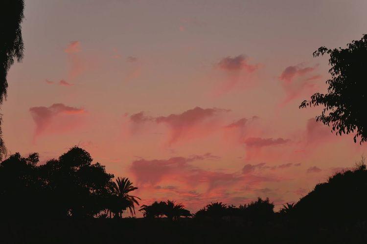 Purple sky Tree