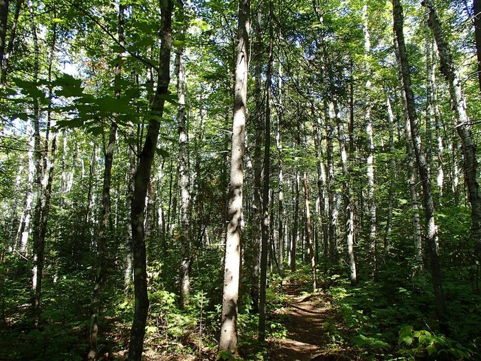 Forêt mixte laurentienne - Laurentian Mixed Forest (Parc national de la Mauricie) Plant Tree Growth Land Forest Beauty In Nature No People Green Color Tranquility Scenics - Nature WoodLand Sunlight Lush Foliage