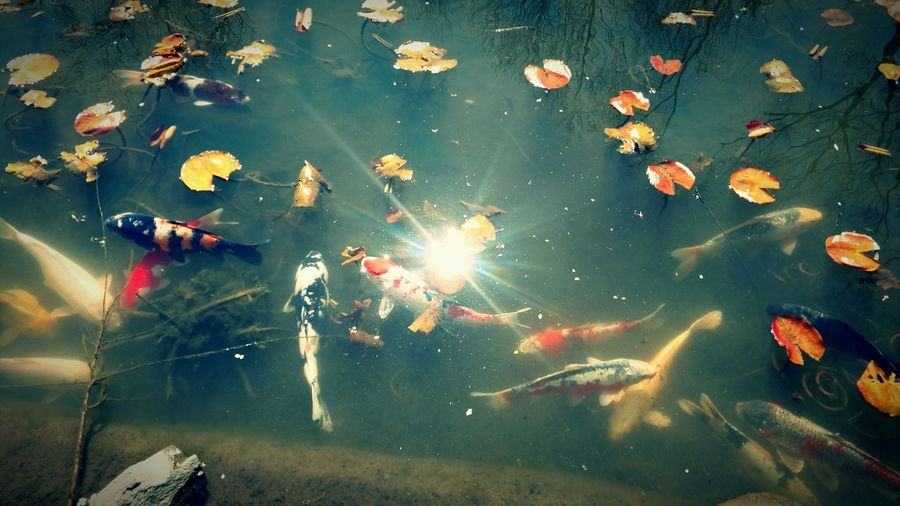 Fish Pond Bright Sunlight On Water Nature