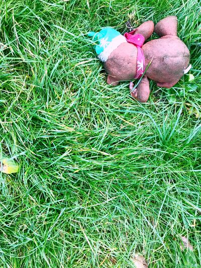 Past season Xmas Green Sad Over Forgotten Season  Past Dogtoy Over Is Christmas Toy Playtoy High Angle View Grass Field Day No People Nature Outdoors Growth Freshness Close-up EyeEm Ready   EyeEmNewHere