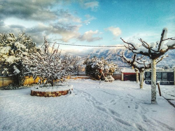 Tree Winter Snow Nature Cold Temperature Beauty In Nature No People Sky Cloud - Sky Landscape Outdoors Day Postcard Nature Corinth Greece Mobile Photography Landscape_photography Greece