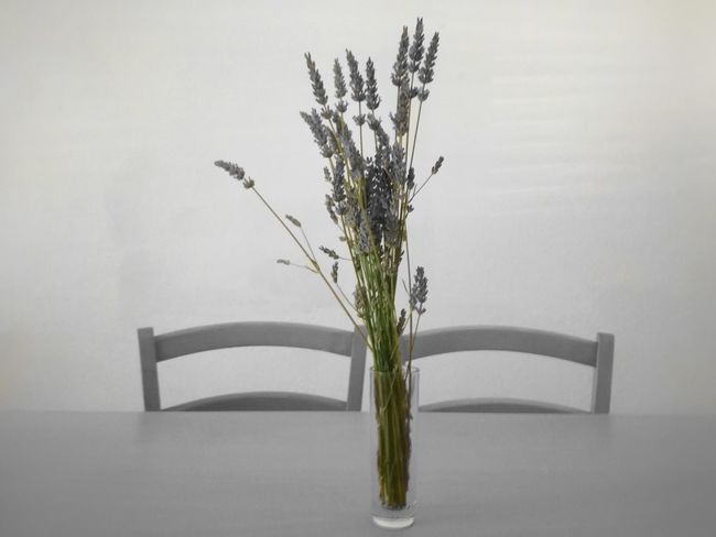 💞 Vase Flower Gray Background Indoors  White Background Freshness Fragility Growth No People Day Pink Flowers Lavender Table Two Chairs Kitchen Table Simplicity Dinning Table Dinning Room Nature Room Living Room Flower In The Vase Lavender Flowers Table And Chairs Minimalist