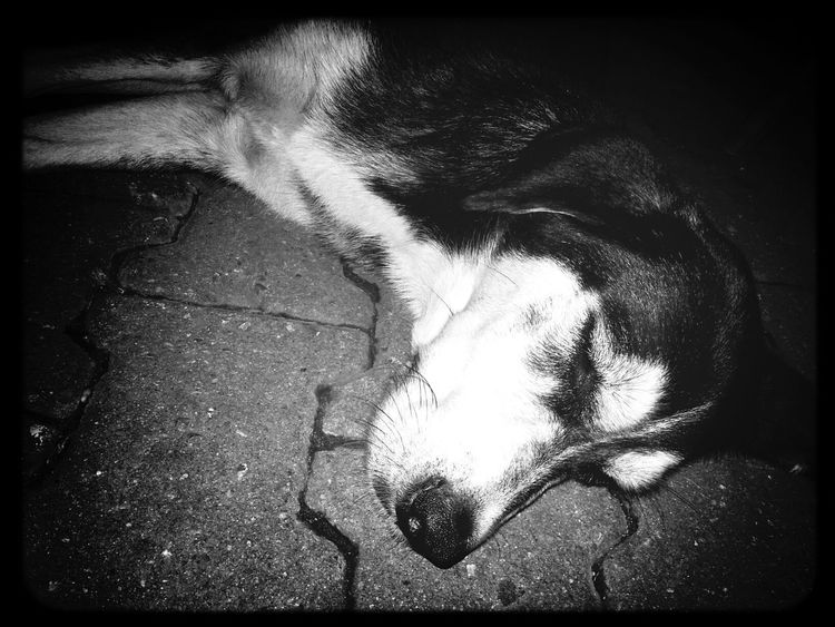 Dog Love Dogs Black & White