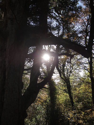 Backlit Branch