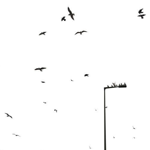 Tweet! Birds EyeEm Birds Sky Minimalism Rsa_minimal AMPt_community My Fuckin Berlin Open Edit