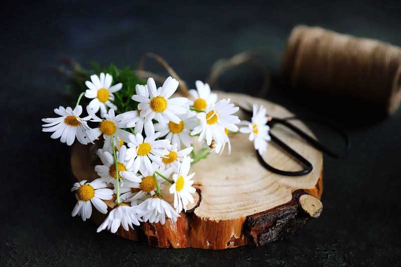 Close-up of white daisy flowers on table