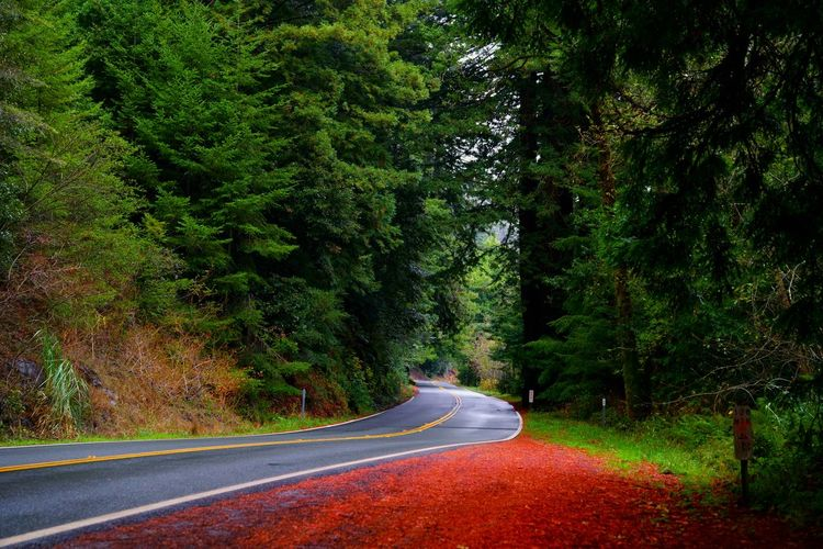 Road Through Redwood Forest. My USA Journey Tree Road Green Color Grass Empty Road Double Yellow Line Diminishing Perspective Dividing Line Country Road vanishing point Treelined Yellow Line Countryside Mountain Road Asphalt The Way Forward Stay Out