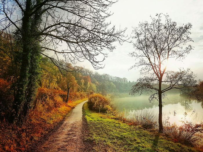 Tree Nature Water Beauty In Nature Outdoors Mosel River Moselle Luxemburg Trees And Nature Luxembourg Fall Beauty Autumn Colors Fall Colors Fall Leaves Evening Light Autumn🍁🍁🍁 Trees Autumn Collection